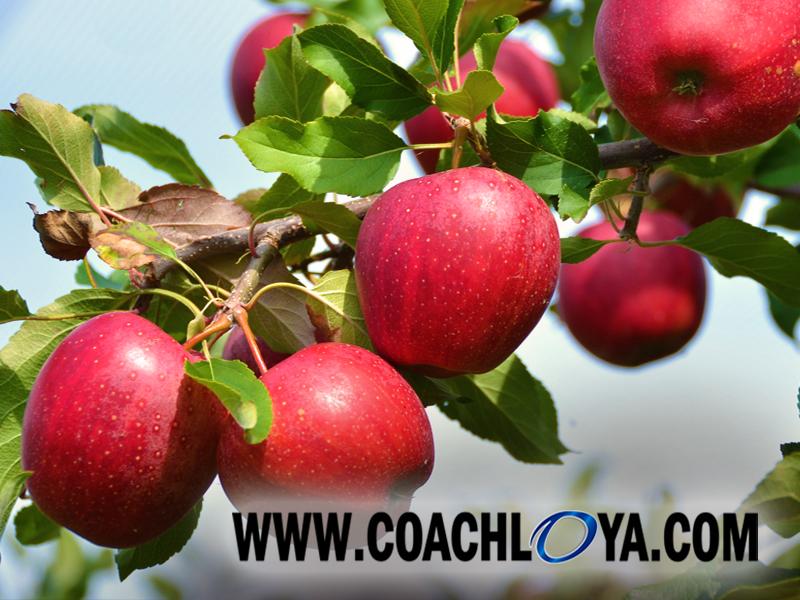 Targeting the Low Hanging Teammate Fruit